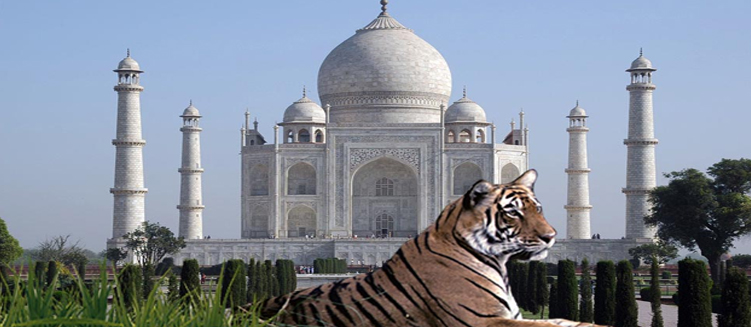 Taj Mahal Wildlife Tour