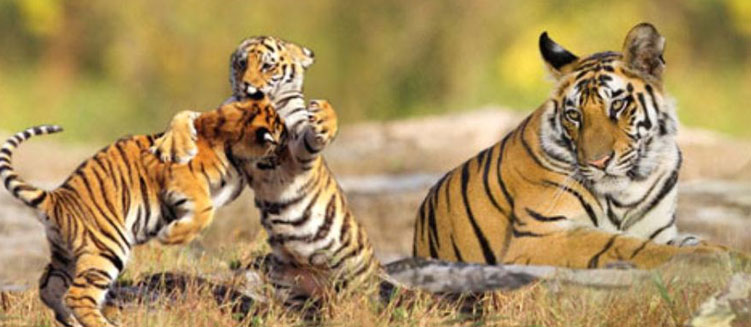 Kaziranga & Manas Wildlife Sanctuary Tour in Assam